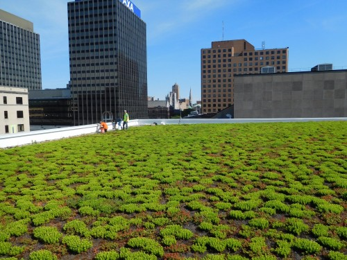 Green Roof Maintenance